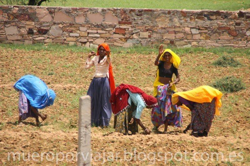 Trabajadoras del campo en India