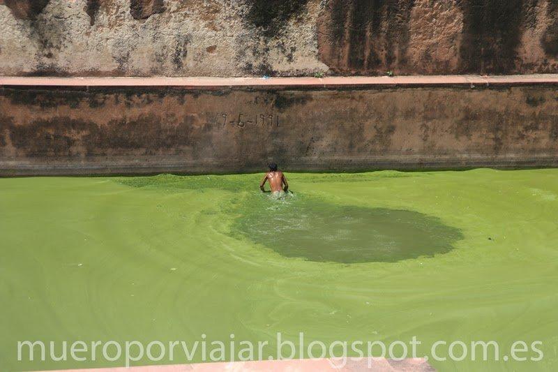 Estanque verde con una persona bañándose, India