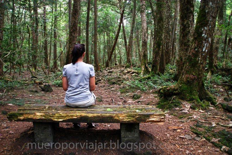El bosque de los suicidios en Japón