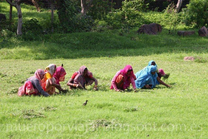 Mujeres trabajando en el campo, India