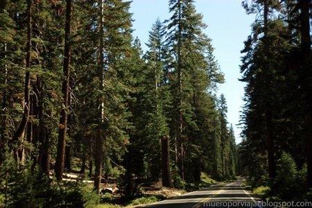 Carretera Tioga Road que cruza todo el parque nacional de Yosemite