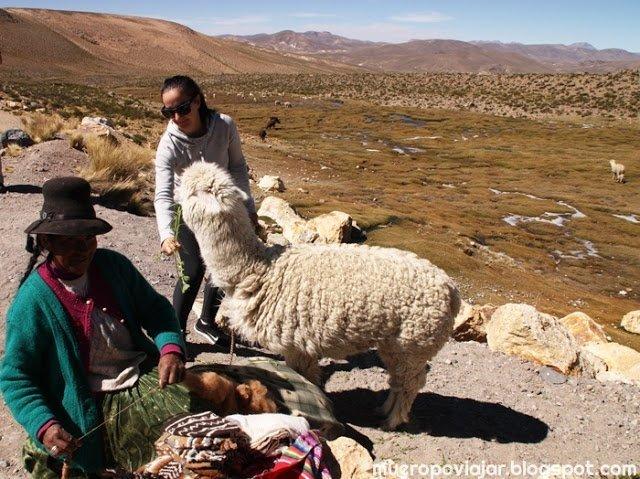 En todas partes hay una vendedora con una alpaca para poder hacerte fotos con ella y darles de comer