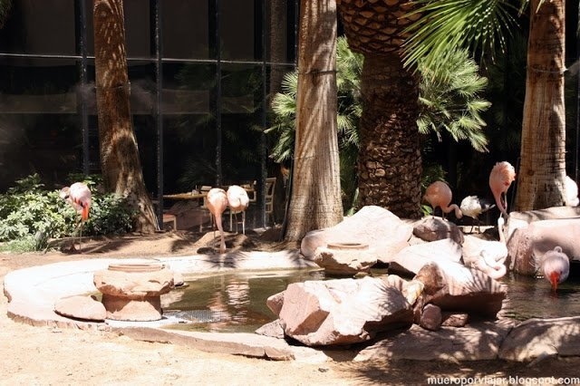 En el jardín interior del Hotel Flamingo hay Flamencos en libertad