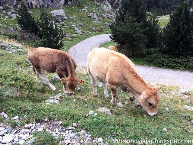 Hay varias zonas donde los animales pastan en total libertad