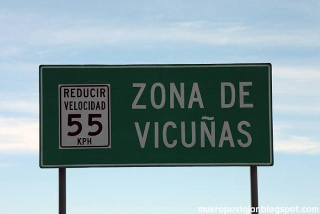 La zona está densamente poblada de Vicuñas