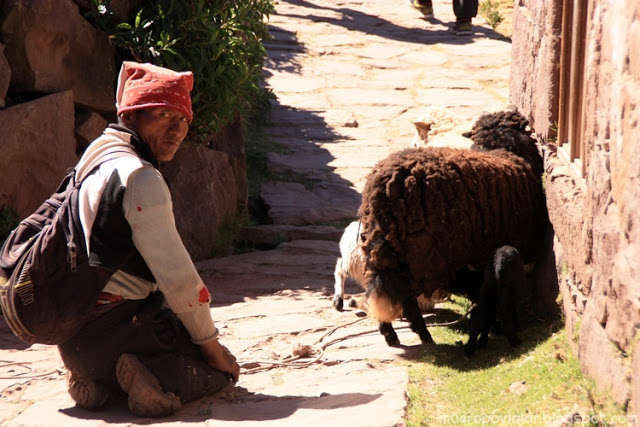 En la isla hay mucho pastor dispuesto a hacerse fotografias a cambio de unos soles