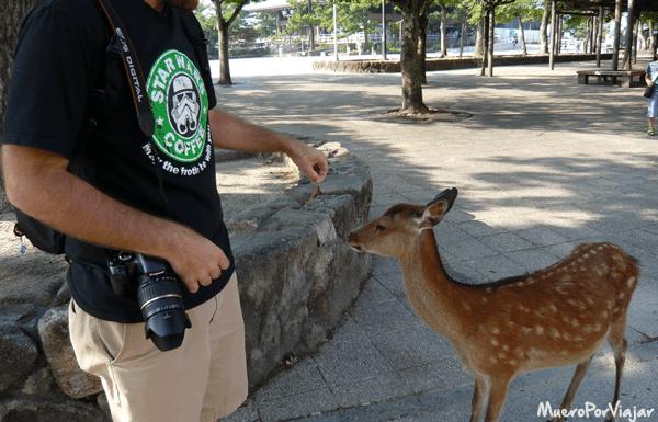 A los ciervos de Nara les gustan más los productos gourmet