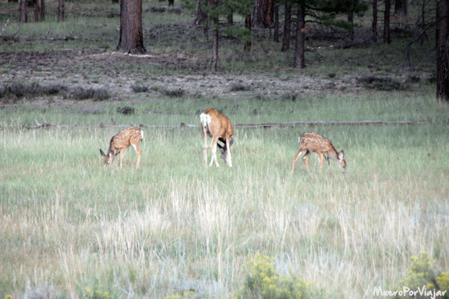 Pudimos ver ciervos en libertad, muy bonito