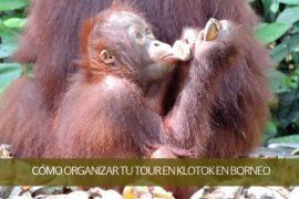 Cómo organizar tu tour en klotok en Borneo – Indonesia