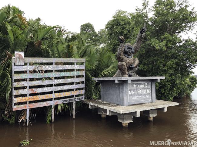 El parque de Tanjung Puting es un habitat de libertad para los orangutanes