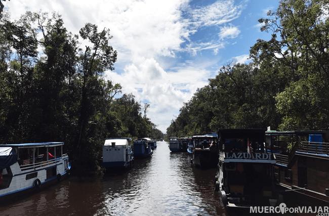 En la travesía del río hay muchos barcos, o Toloks como se les conoce