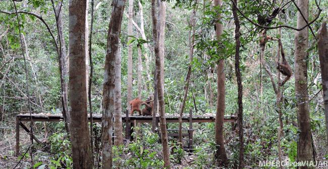 La plataforma de Tanjung Harapan