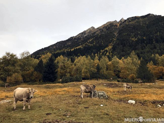En el parque hay animales libres, como estas preciosas vacas que nos acompañaban en el camino