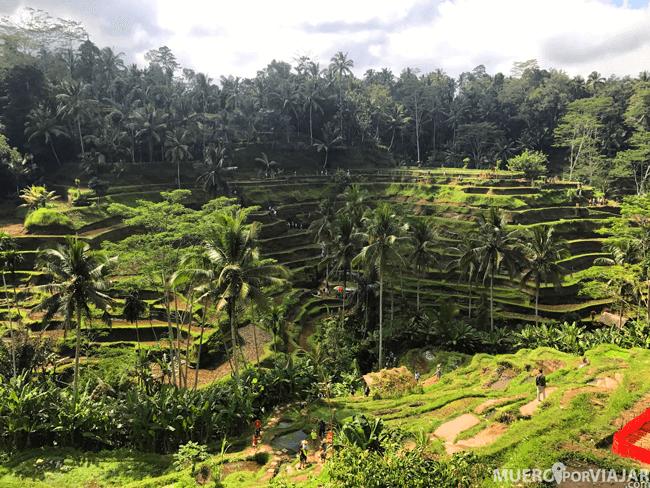 Los coloridos Arrozales Tegalalang en el norte de Ubud
