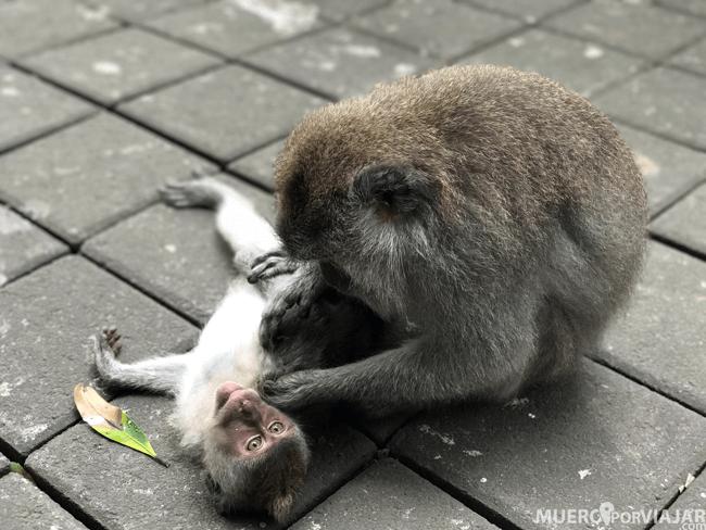 Paseando por el Monkey Forest de Ubud
