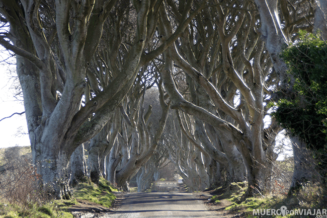 Dark Hedges - Irlanda del Norte