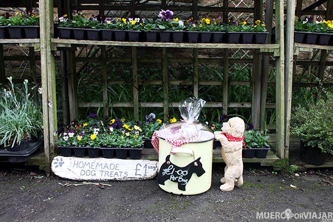 Galletas para perritos en Los Cotswolds