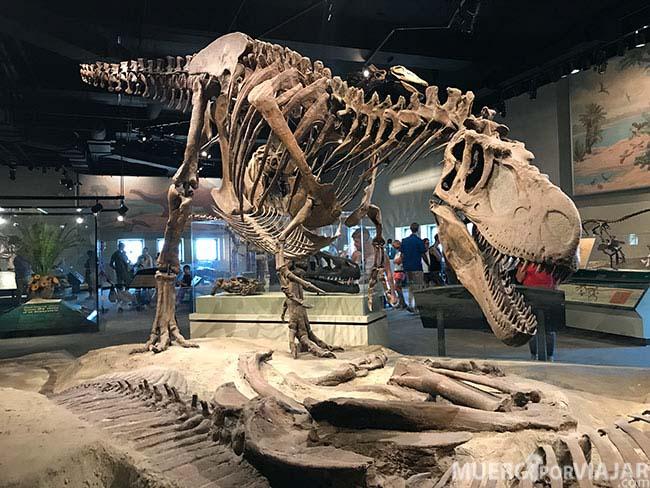 La exposición de dinosaurios es muy grande y completa