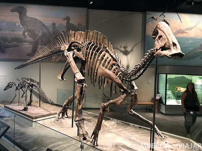 Si eres un entusiasta de los dinosaurios, el Field Museum de Chicago es tu museo