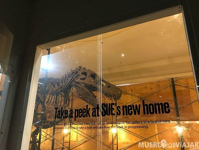 En el Field Museum de Chicago encontramos el que es el esqueleto fósil de TRex mejor conservado del mundo