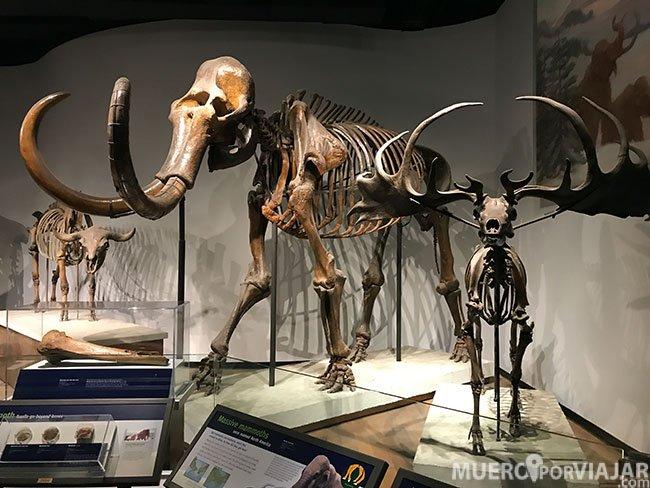 En el Field Museum de Chicago encontramos una gran colección de fossiles