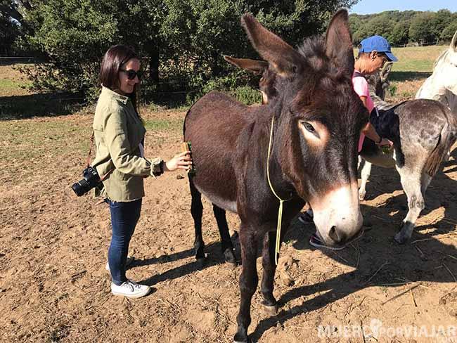Cepillando un burro en el Rukimon (Parque del Montnegre i el Corredor)