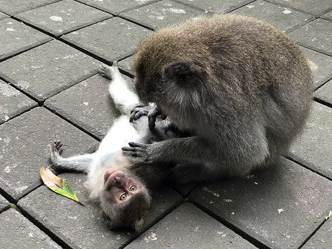 El Monkey Forest de Ubud