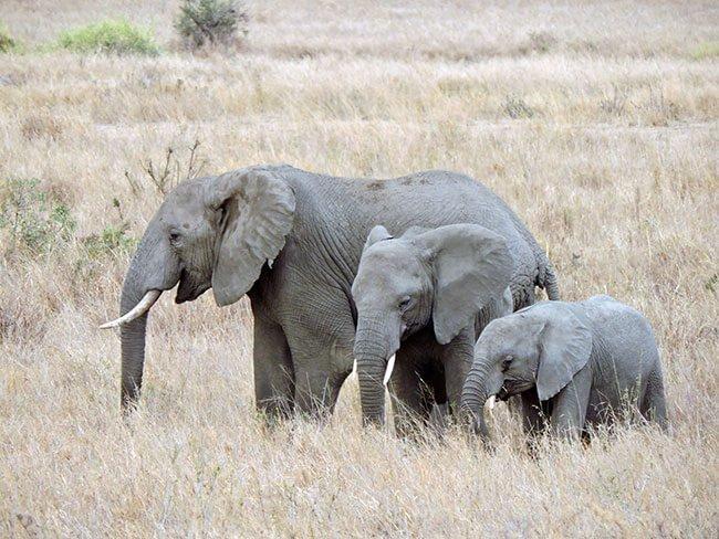 Familia de elefantes en el Serengeti