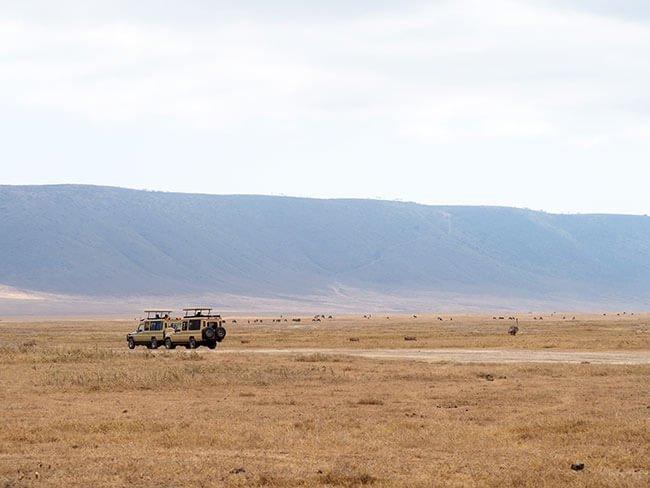 En el safari se circula con jeep ya que tienen tracción 4x4 para poder salvar cualquier obstáculo