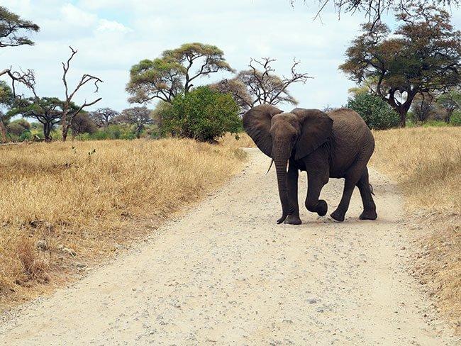 Elefante que venía hacia nosotros