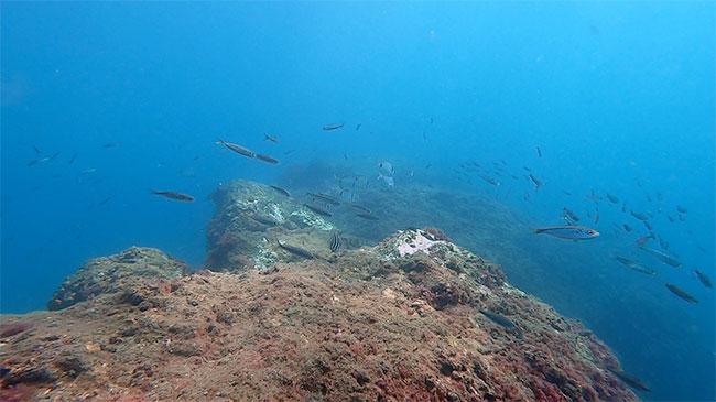 Fauna sub acuática en la Herradura, Granada