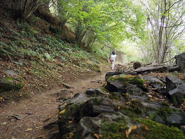 Caminando por el Bosque Encantado de Carlac