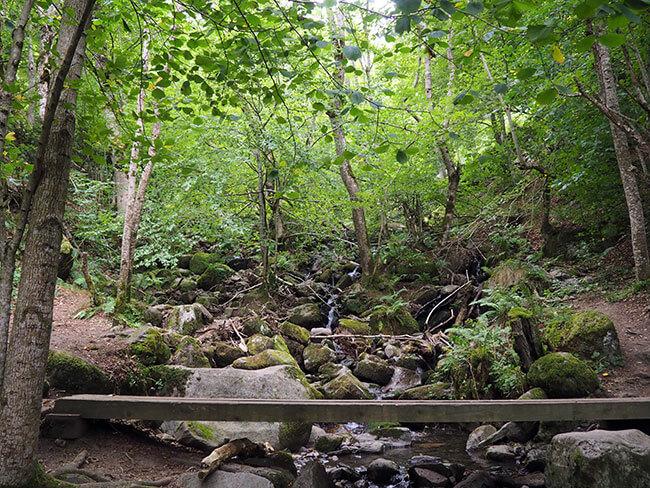 Interior del Bosque Encantado de Carlac