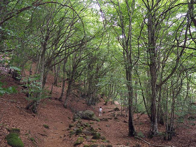 Hayedos del Bosque Encantado de Carlac